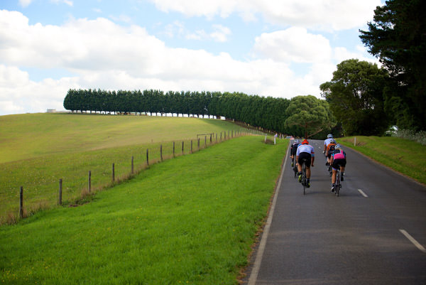 A group of cyclist riding up a tree lined hill